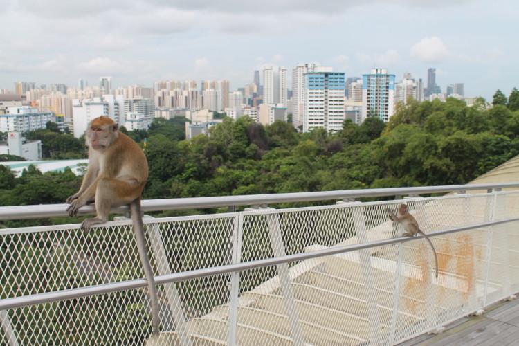 teaching-english-singapore-life