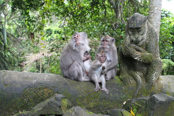 Ubud, a great place to see monkeys in Southeast Asia