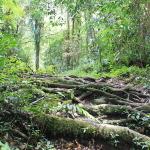 Cameron Highlands: A Dead Man Walking in Malaysia