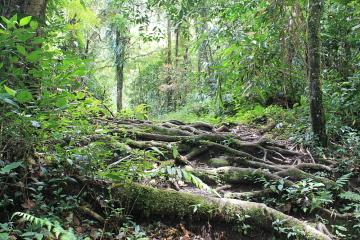 A walking trail in Tanah Rata, Cameron Higlands, Malaysia