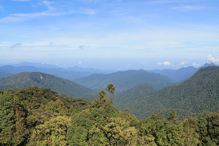 The view from Gunung Brinchang in the Cameron Highlands, Malaysia