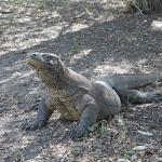 Komodo National Park: More Than Just Dragons!