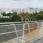 The Best Walks in Singapore: From the Forest to the City