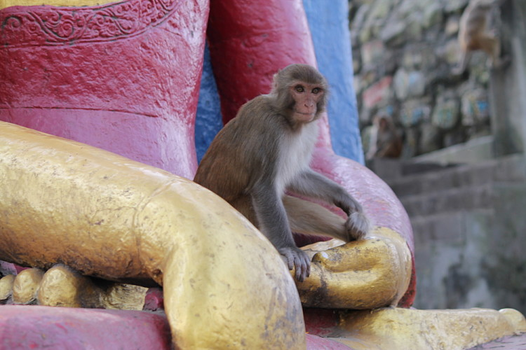 A monkey on a temple at the monkey temple in Kathmandu, Nepal