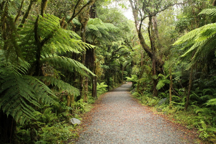 Glaciers and glow worms in Franz Josef (as well as great bush walks)
