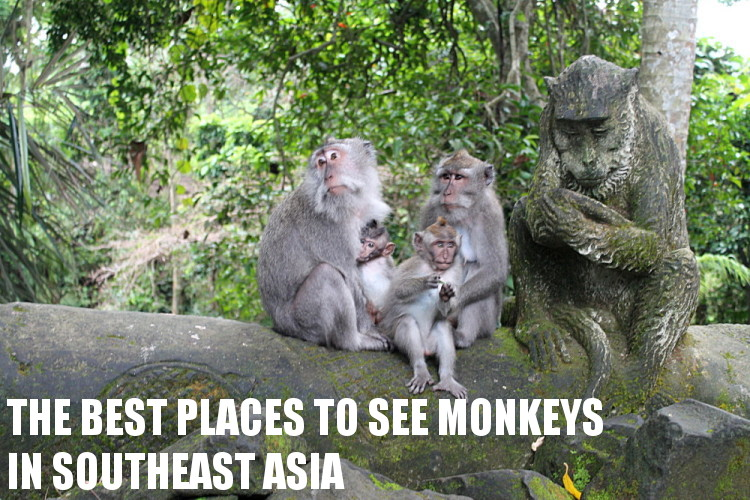 Southeast Asia travel blog - monkeys