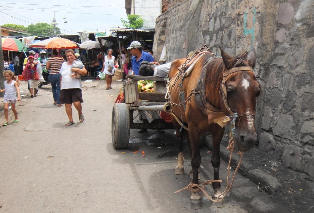 horse-market-granada-nicaragua