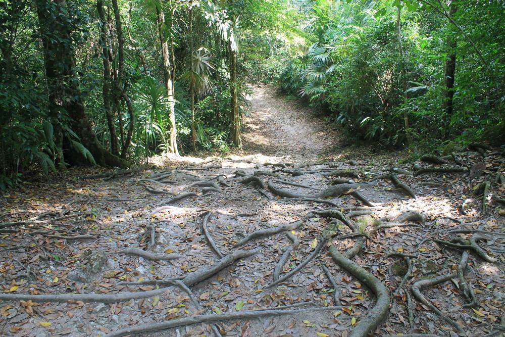 tikal-guatemala-forest-track
