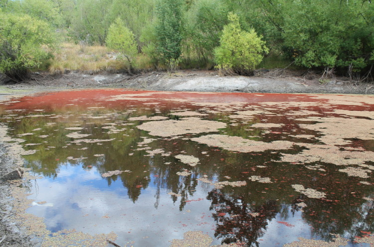 A red pond, St Bathans, New Zealand