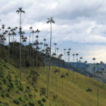 Salento and the Cocora Valley: Exploring Colombia's Coffee Zone