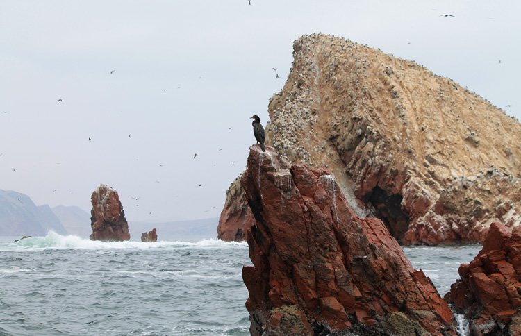 Ballestas Islands, Paracas, Peru, one of the most stunning natural wonders in South America