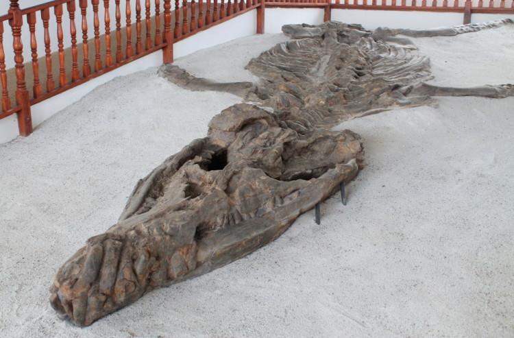 Villa de Leyva, Colombia: El Fossil Museum