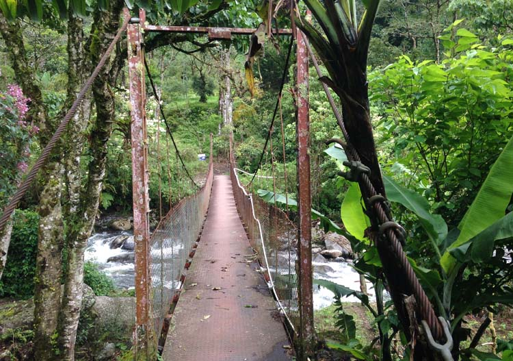 Cloud forest hiking in Boquete -- the Lost Waterfalls trail