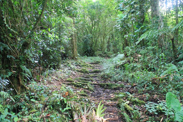 Cloud forest hiking in Boquete, Panama: Quetzal Trail cloud forest