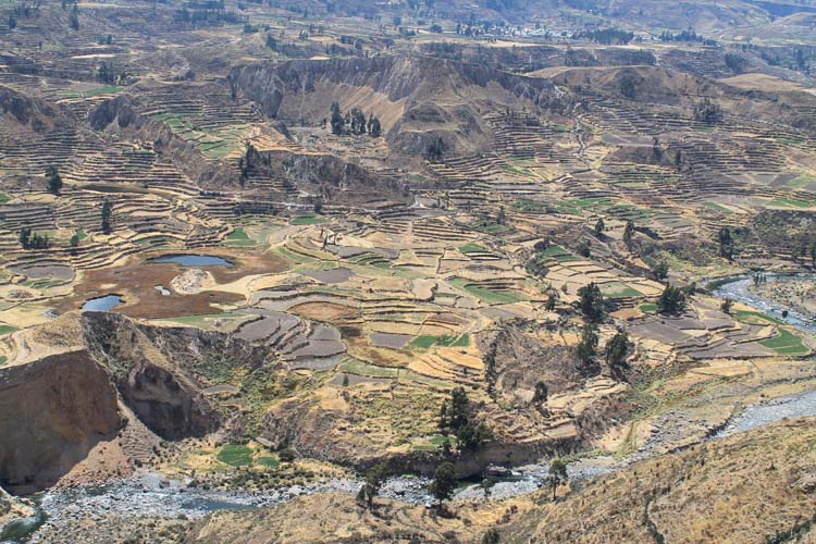 The 2 day Colca Canyon Trek, Peru: Ancient terraces near Arequipa