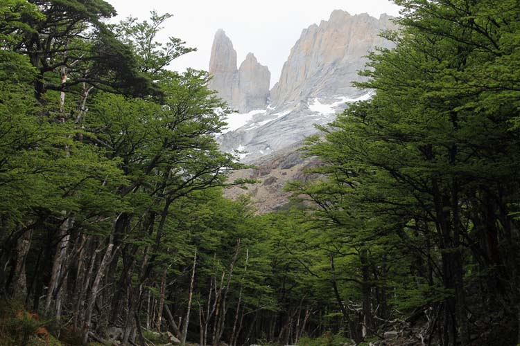 The W Trek, Torres del Paine National Park: Cuernos forest