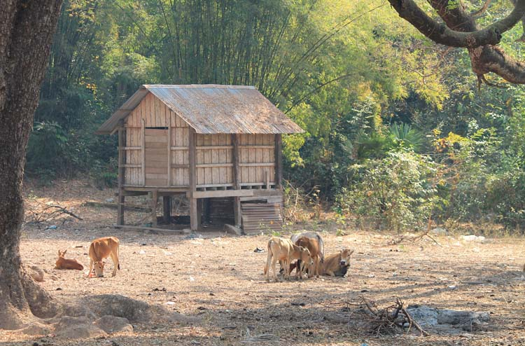 A 3 day Mekong River cruise in southern Laos -- a rural Lao village