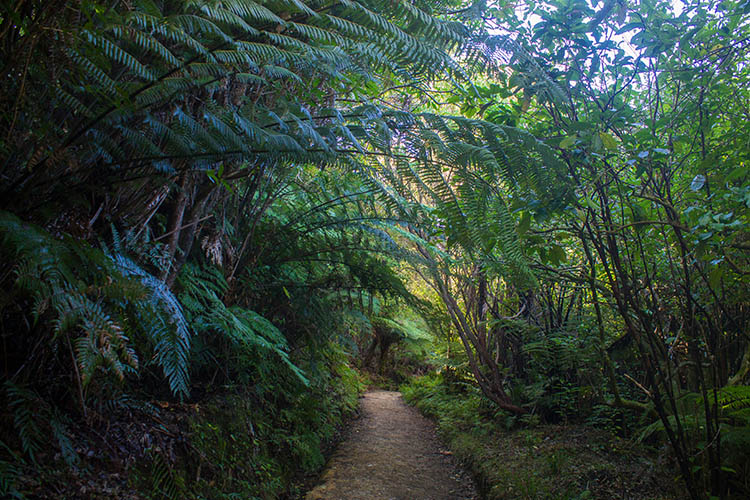A perfect day hike in Abel Tasman National Park, New Zealand