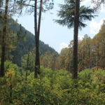 Old Manali VS Kasol VS Dharamkot: Which Hippy Tourist Town in India is Right for You?