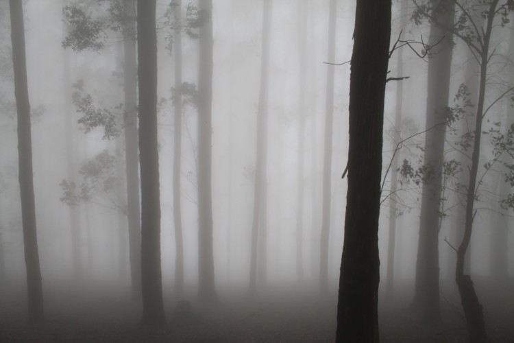 Trees in the fog on Ella Rock, at the Hill Country in Sri Lanka