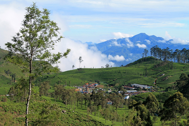 A view of rolling tea fields and mountains at the hill country in Sri Lanka