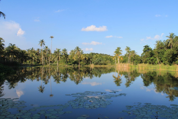 A pond on Pulau Ubin, Singapore