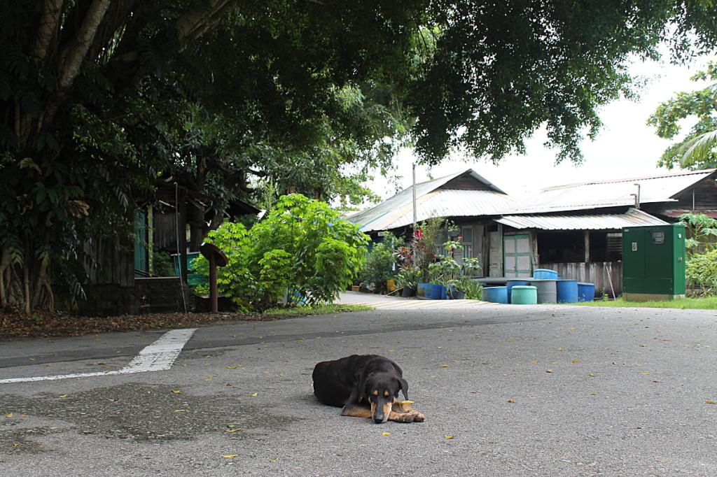 lazydog2