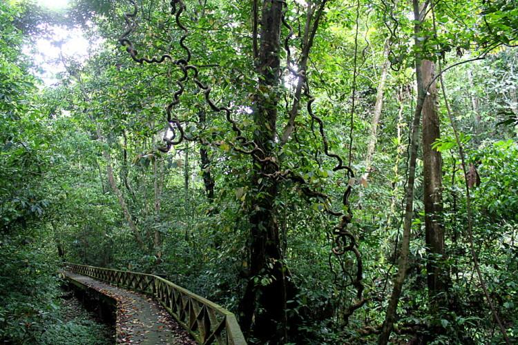 A jungle path on the way to Niah Caves, Miri, Sarawak, Malaysia