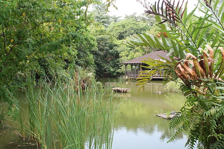 Sungei Buloh Wetland Reserve, Kranji, Singapore