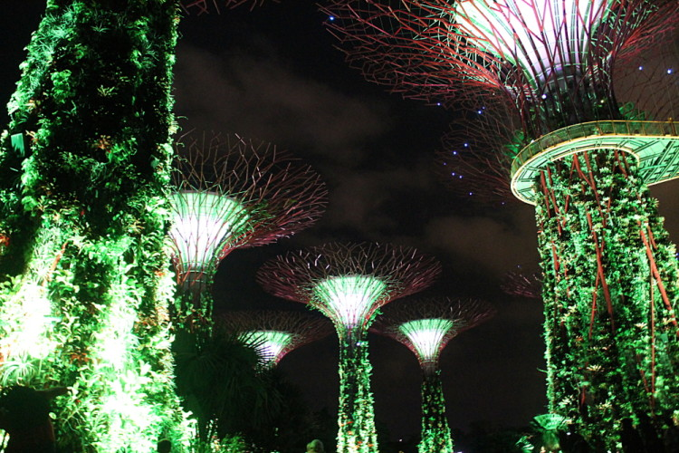 The supertrees at night at Gardens by the Bay, downtown Singapore