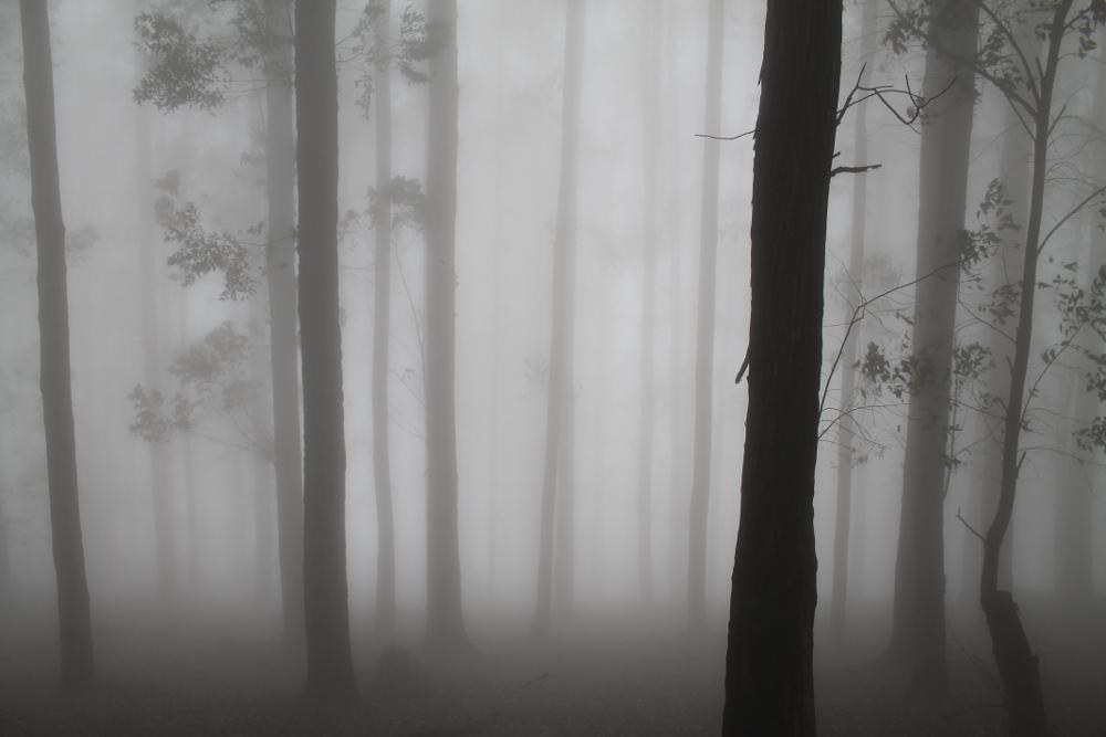 ella-rock-fog