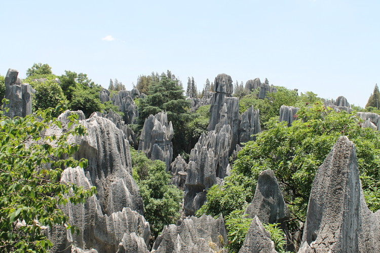 Knife like peaks and trees at the Stone Forest in Yunnan, China