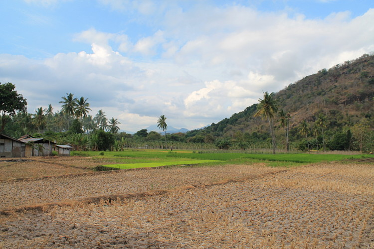 A farm in Maumere, Flores, Indonesia