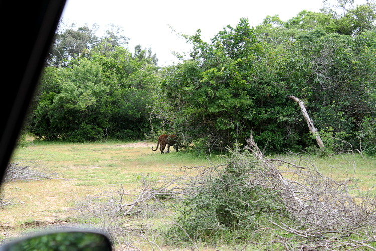 Backpacking in Sri Lanka - leopard spotting at Yala National Park