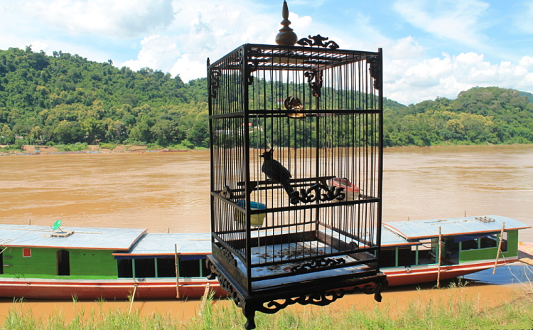 A bird cage at a riverside restaurant in Luang Prabang, Laos