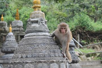 The monkey temple in Kathmandu, Nepal