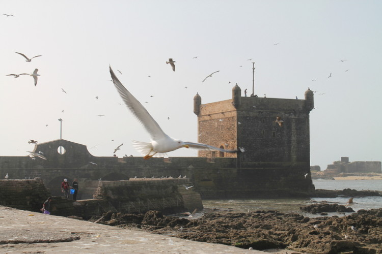 Seagulls at Scala du Port, during our day trip to Essaouira, Morocco