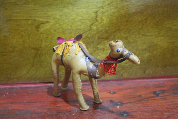 Our pet camel Tagine, bought during our day trip to Essaouira