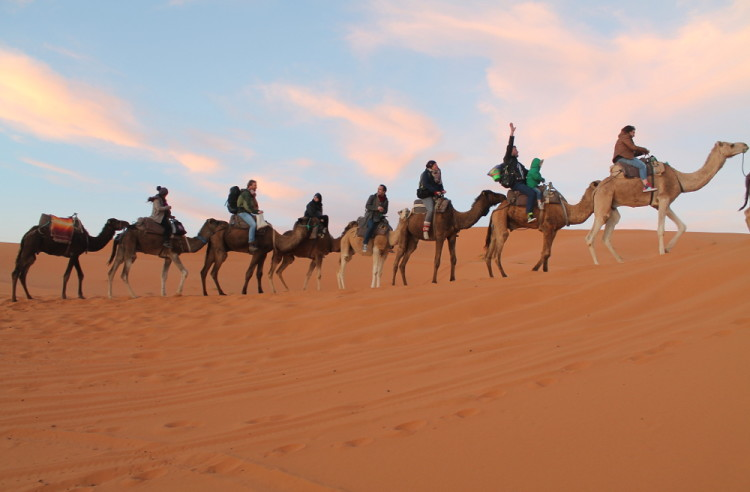 Camels in the Sahara Desert at Erg Chebbi, Morocco