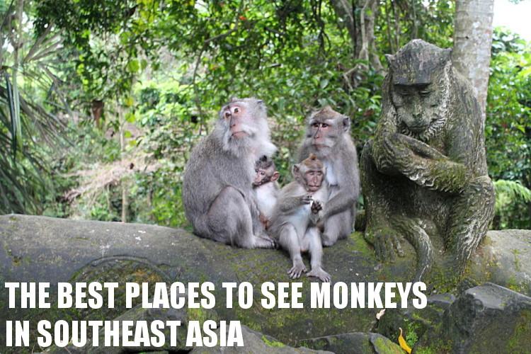 Southeast Asia travel blog - monkeys