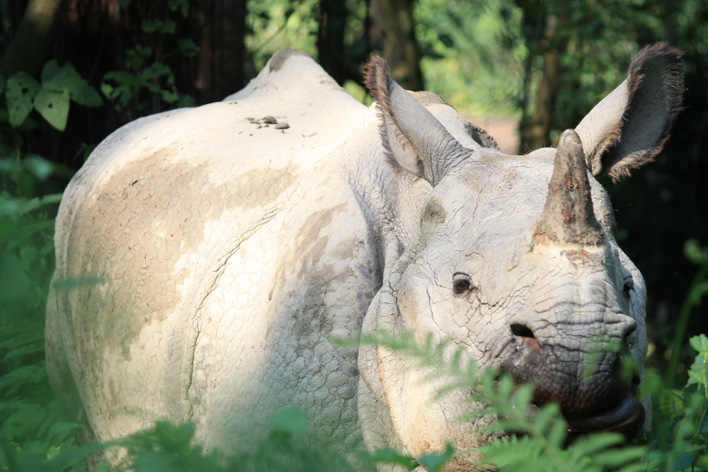 A year on the road: Rhino in Nepal