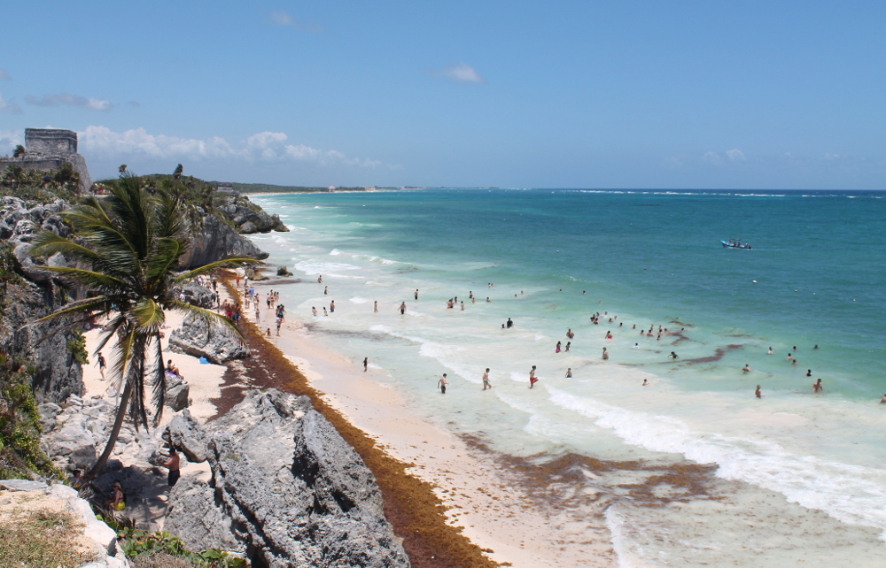 People swimming with the seaweed in Tulum, Mexico