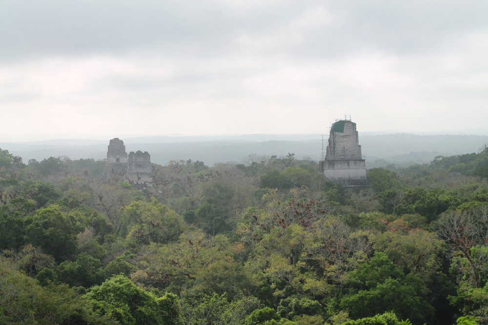 tikal-from-above