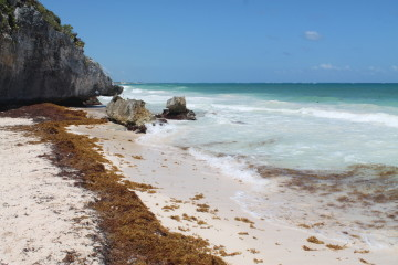Attack of the killer seaweed in Tulum, Mexico