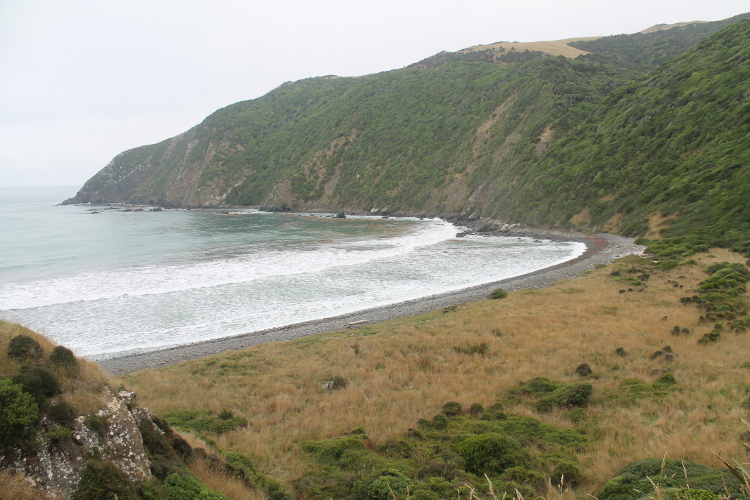roaring-bay-catlins-new-zealand