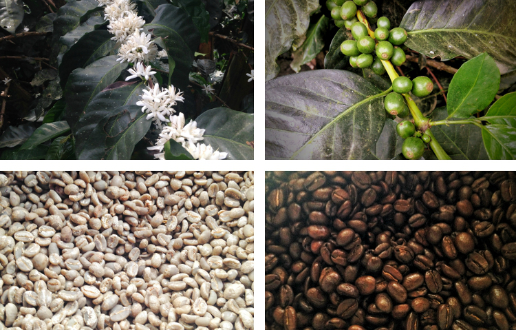 Finca Don Elias coffee tour, Salento - while exploring Colombia's coffee zone