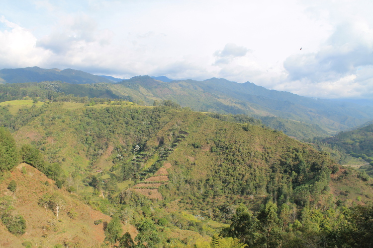 Colombia's coffee zone - scenery on the way back to Salento from Finca Don Elias