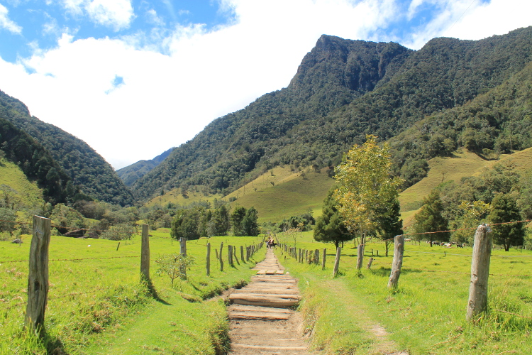 The Cocora Valley hike near Salento, part of Colombia's coffee zone
