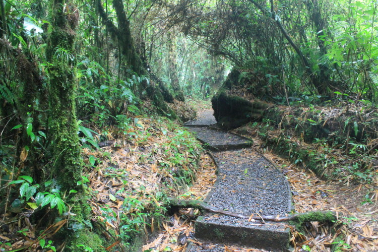 Backpacking in Costa Rica - Santa Elena cloud forest