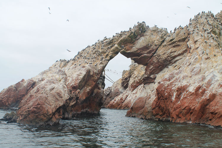 Ballestas Islands tour in Paracas, Peru
